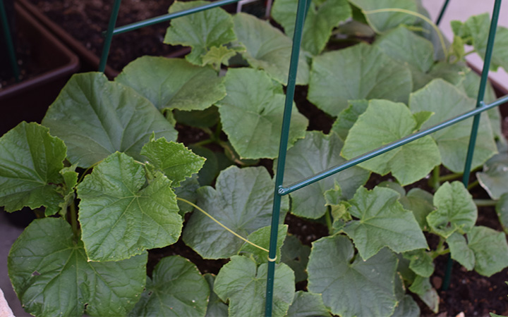 The Beginner's Guide to Container Vegetable Gardening: Planning Your Garden Layout